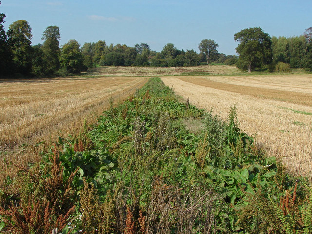 Fallow strip in a farm field
